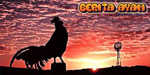 ?Bandar Sabung Ayam - Mitos Ayam Berkokok Di Malam Hari. Banyak orang yang mengatakan bahwa ketika mendengar ada ayam berkokok di malam hari berarti ayam itu telah melihat makhluk halus atau melihat tuyul sedang berkeliaran.