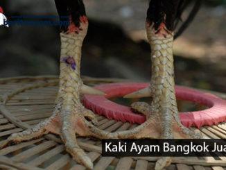 Kaki Ayam Bangkok Aduan Juara