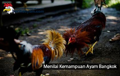 kemampuan-ayam-bangkok