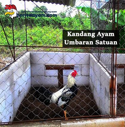 Kandang Ayam Umbaran Satuan