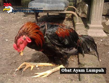 Inilah 6 Cara Membuat Obat Ayam Lumpuh Tradisional