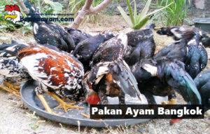 Inilah Rahasia Kandungan Pakan Ayam Bangkok Aduan