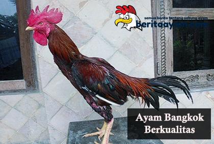 Cara-Menilai-Ayam-Bangkok-Berkualitas-Dari-Bentuk-Tulang