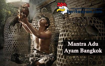 Mantra Adu Ayam Bangkok, Di Percaya Bisa Menenangkan Pertandingan