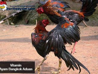Beberapa Jenis Vitamin Ayam Bangkok Aduan Dan Cara Pemberiannya