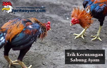 Trik Kecurangan Sabung Ayam