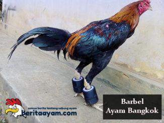 Manfaat Dan Cara Melatih Menggunakan Barbel Ayam Bangkok