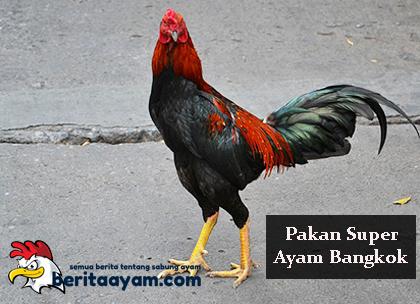 Pakan Super Ayam Bangkok Yang Sesuai Dengan Gaya Bertarung Ayam