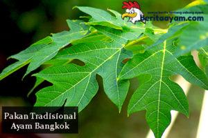 Penjelasan Mengenai Cara Membuat Pakan Tradisional Ayam Bangkok
