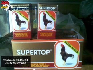 Penguat Stamina Ayam Bangkok
