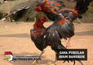Gaya Pukulan Ayam Bangkok