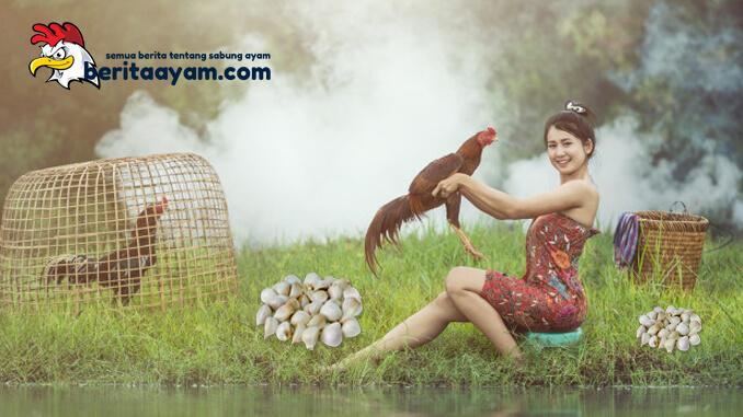 Khasiat Bawang Putih Untuk Ayam Aduan Yang Wajib Diketahui