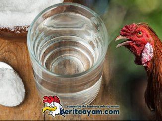 Khasiat Air Garam Untuk Ayam Aduan