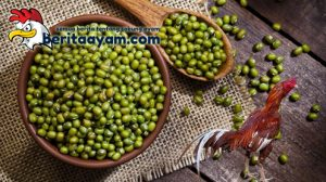 Beberapa Manfaat Kacang Hijau Untuk Ayam Aduan