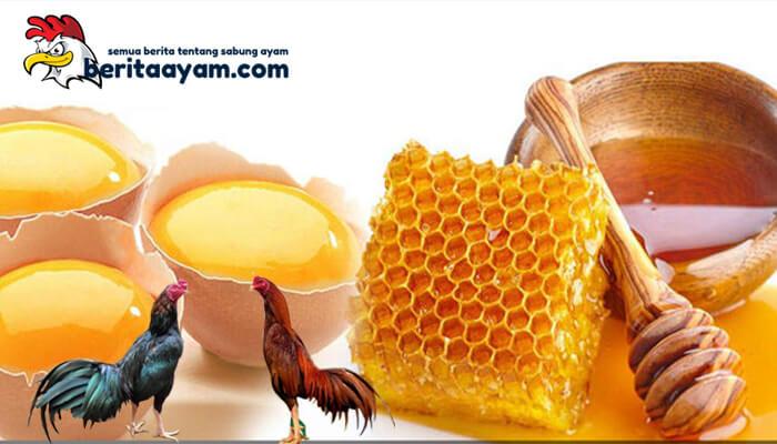 Khasiat Telur dan Madu Untuk Ayam Aduan