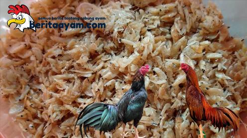 Khasiat Udang Rebon untuk Ayam Bangkok