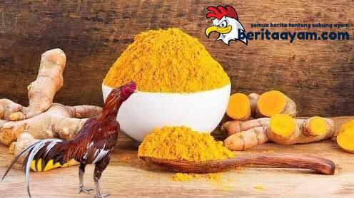 Manfaat Ampuh Kunyit Untuk Ayam Aduan